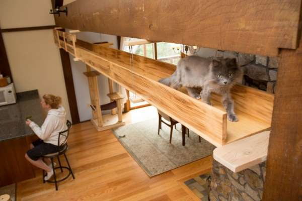 3. casa gatti