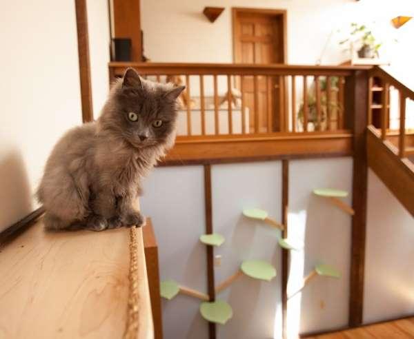 4. casa gatti