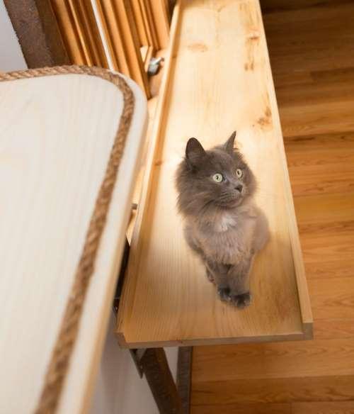6. casa gatti