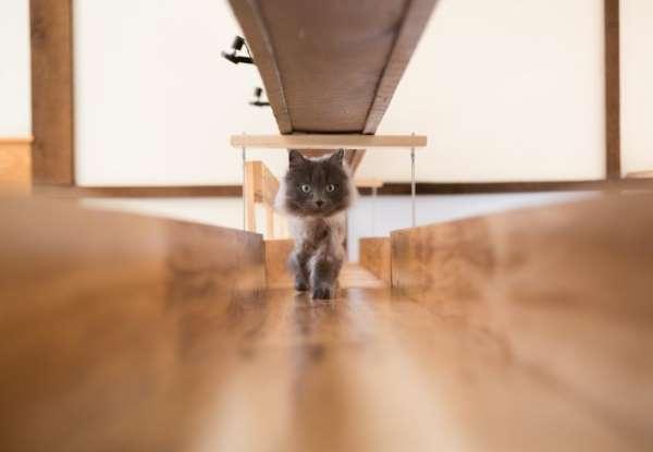 9. casa gatti
