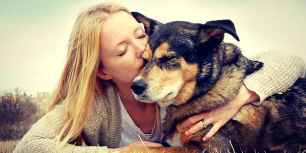 abbracciare cani