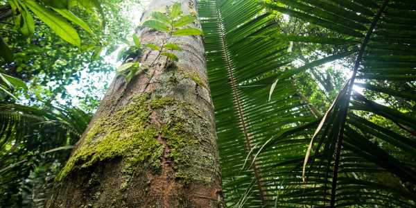 amazzonia diga 1