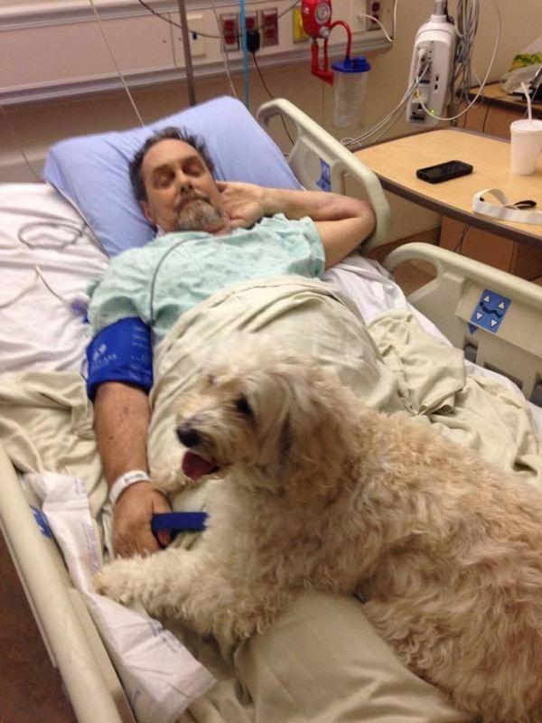 animali in ospedale 2