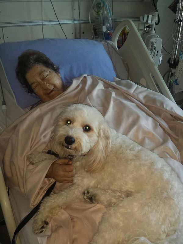 animali in ospedale 3