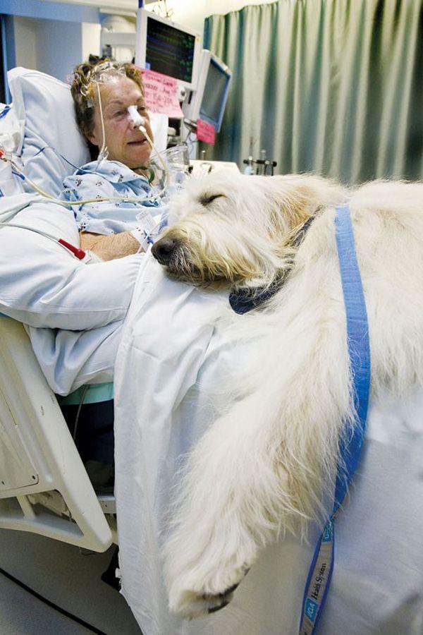 animali in ospedale 6