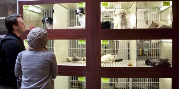 animali in vetrina1
