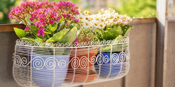 balconi in fiore enna