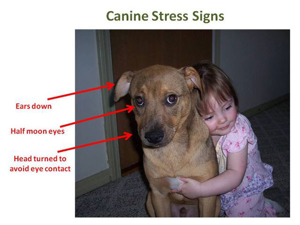 cani segnali stress