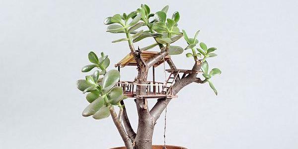 casa albero miniatura cover