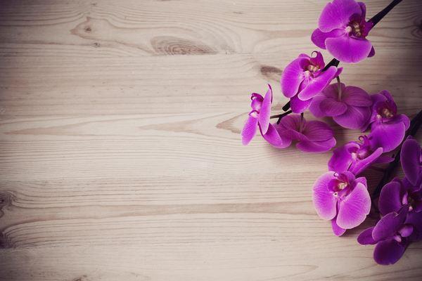 come coltivare le orchidee 2