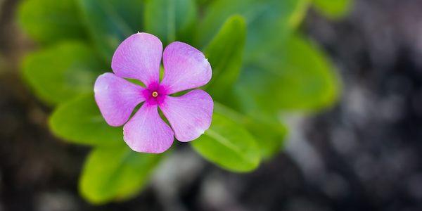 garden therapy giardino salute felicità