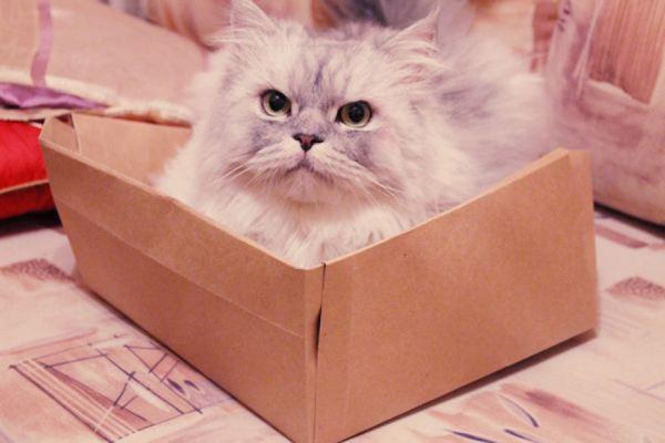 gatti tecnologia 1