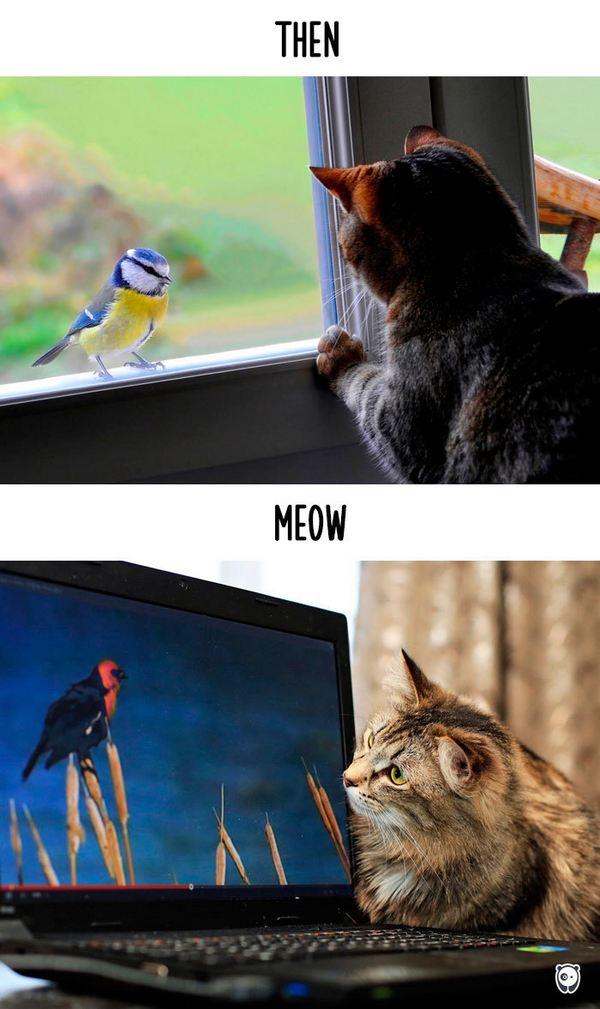 gatti tecnologia 10