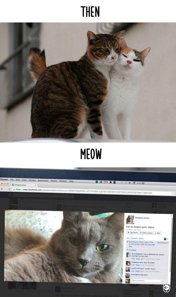 gatti tecnologia 12