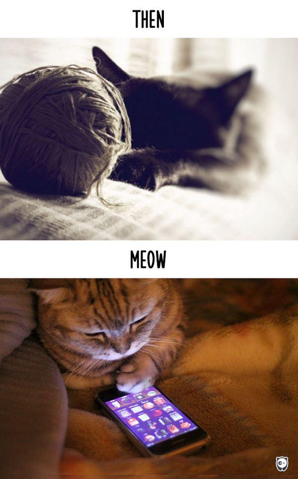 gatti tecnologia 13