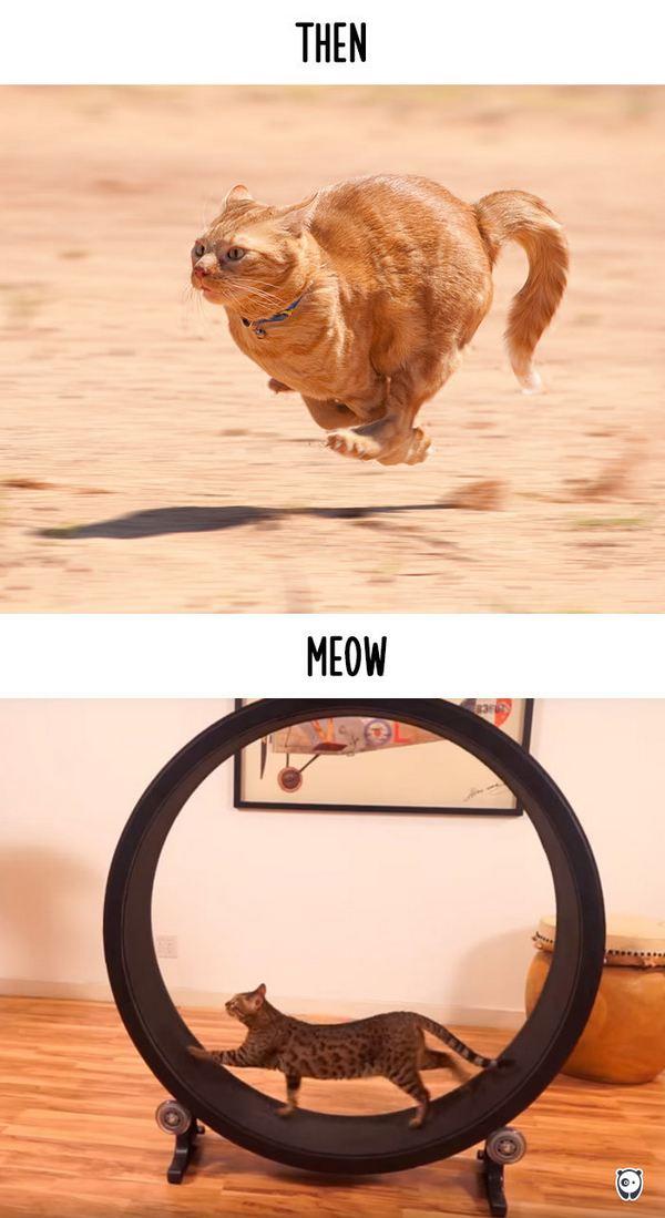 gatti tecnologia 14