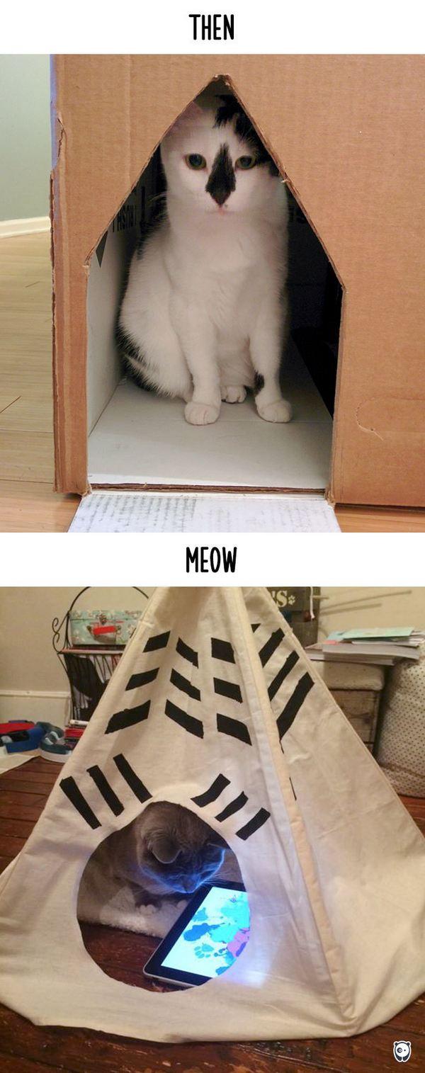 gatti tecnologia 15