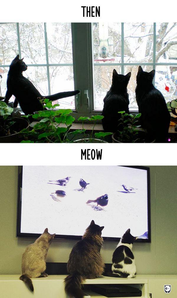 gatti tecnologia 16