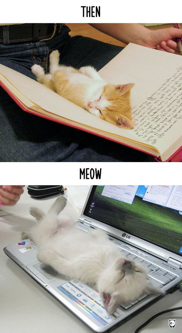 gatti tecnologia 4