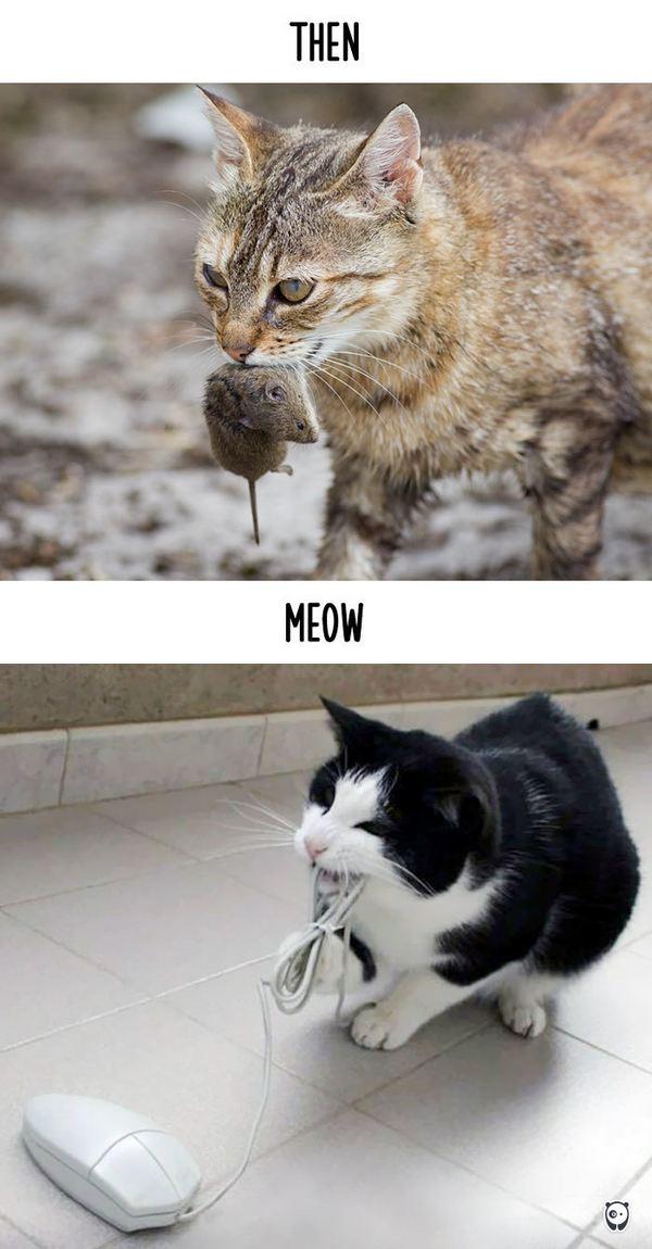 gatti tecnologia 8