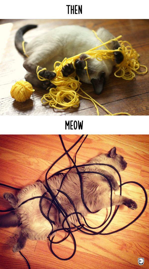 gatti tecnologia 9