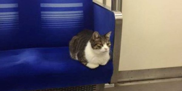 gatto metro