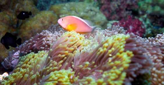 grande barriera corallina sbiancamento