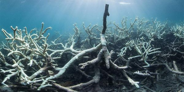 grande barriera corallina sbiancamento 2