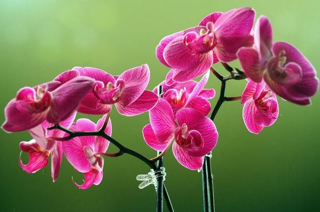 Orchidee Da Esterno.Orchidea Come Coltivarla In Casa E In Giardino Greenme It