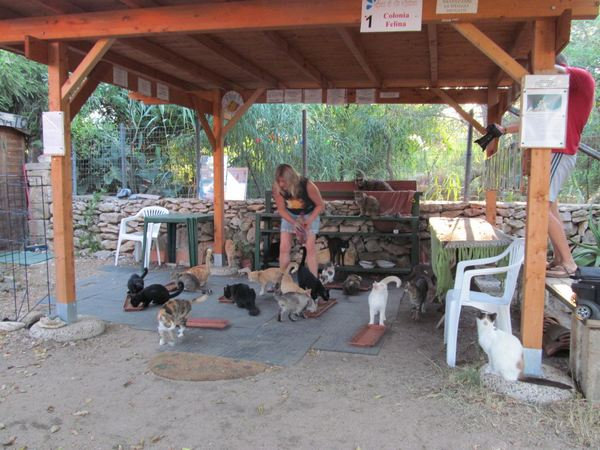 spiaggia gatti sardegna 7