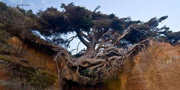 alberi coraggio