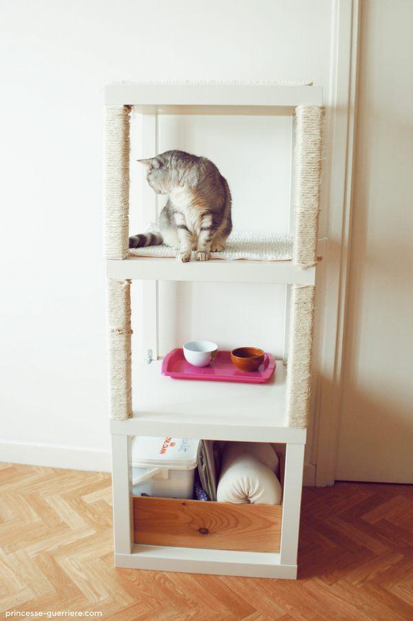 alberi gatti 1
