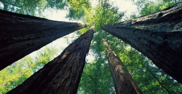 alberi inquinamento