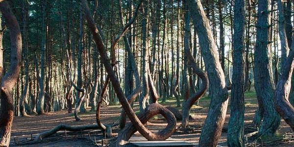 alberi straordinari