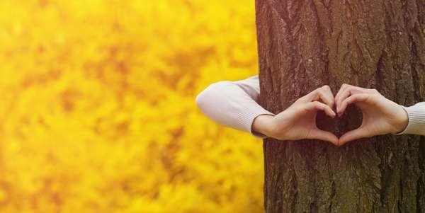 amare gli alberi