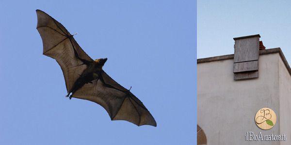 bat-box-pipistrelli
