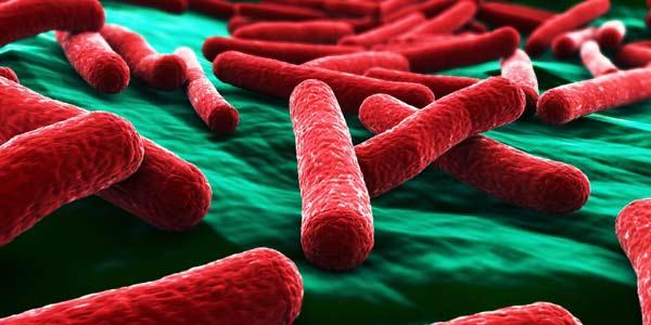 batteri resistenti antibiotici