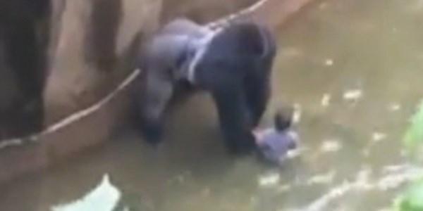 bimbo gorilla