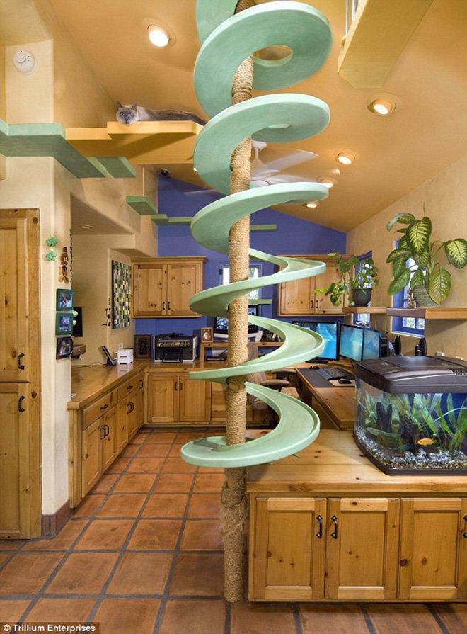casa paradiso per gatti