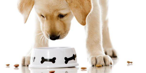 cucina casalinga cani