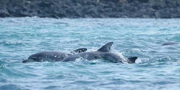 delfini liberi