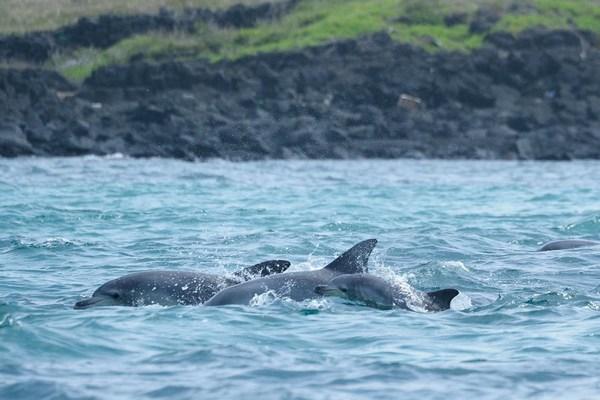 delfini liberi cover