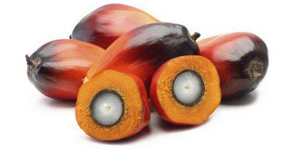 olio palma salute efsa