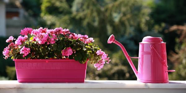 piante per un balcone all'ombra