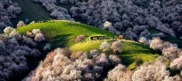 valle albicocche cina