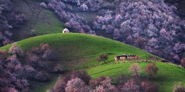 valle albicocche cina3