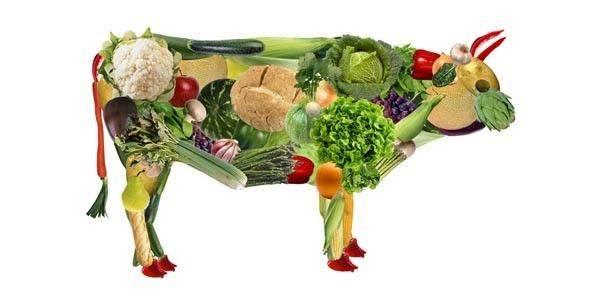 La dieta fruttariana e crudista è alla base della dieta senza muco