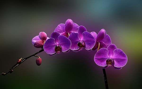 curare orchidee 1