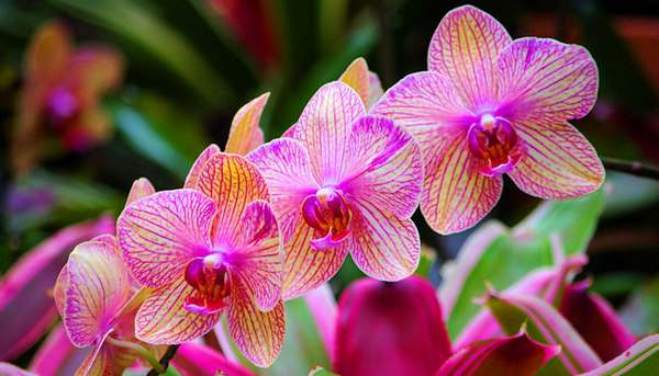 Fiori Orchidea.Orchidea Come Curarla E Mantenerla In Fiore Video Greenme It