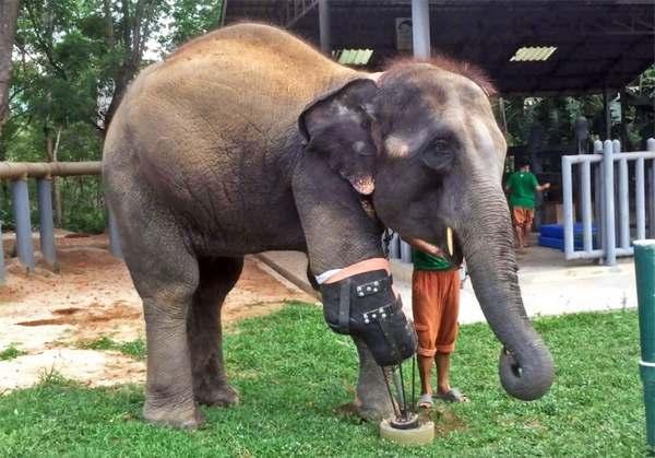elefanti protesi 1